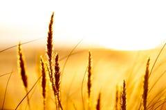 Grże barwionego krajobraz z niektóre roślinami Zdjęcie Stock