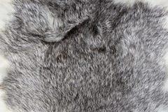 Grże srebro i białego naturalnego Zwierzęcego futerkowego tekstury tła zbliżenie obraz royalty free
