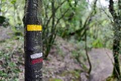 GR在一棵树的道路标记在西班牙 免版税库存照片