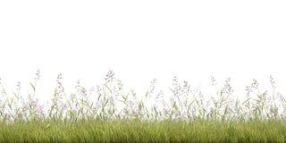gräslinje Fotografering för Bildbyråer