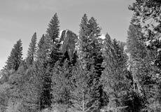 Gr Capitan in Yosemite Royalty-vrije Stock Foto
