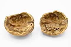 Gr?es marrons bege saud?veis e nutritivos da noz Escudos esmagados da noz imagens de stock royalty free