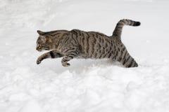 Grå färgkatten hoppar på snowen Royaltyfria Foton