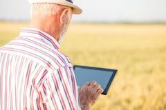 Gr? haired agronom eller bonde som anv?nder en minnestavla i vetef?lt arkivbild