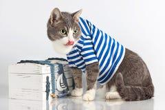 Grå katt i sjömandräkt på bakgrund med bröstkorgen Arkivbild