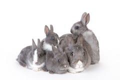 Grå moderkanin med fyra kaniner Royaltyfri Bild