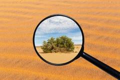 Gr?n buske i den Sahara ?knen fotografering för bildbyråer
