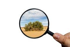 Gr?n buske i den Sahara ?knen arkivbild
