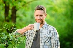 gr?n kolonitea Helt bladte Utm?rkt smak Tyck om den varma drycken Naturlig drink Sund livsstil Jag f?redrar royaltyfria foton