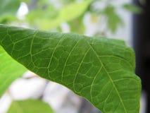 gr?n leaf royaltyfri fotografi