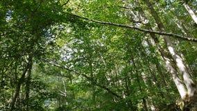Gr?n skog arkivfilmer