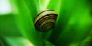 gr?n snail arkivbilder