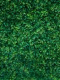 Gr?n tr?dv?ggbakgrund fotografering för bildbyråer