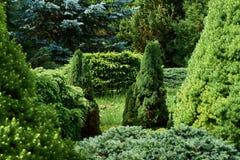 Gr?n vegetationbakgrund arkivfoto