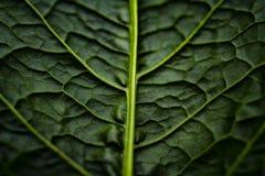 Gr?n vegetativ textur fr?n ett stycke arkivfoto