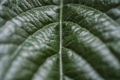 Gr?n vegetativ textur fr?n ett stycke royaltyfri foto