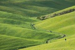 Gr?ne H?gel mit Zypressen und gr?ne Wiesen Landschaft Val d ?Orcia im Fr?hjahr Zypressen, H?gel und gr?ne Wiesen stockbilder