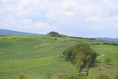 Gr?ne H?gel mit Zypressen und gr?ne Wiesen Landschaft Val d ?Orcia im Fr?hjahr Zypressen, H?gel und gr?ne Wiesen stockbild