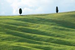 Gr?ne H?gel mit Zypressen und gr?ne Wiesen Landschaft Val d ?Orcia im Fr?hjahr Zypressen, H?gel und gr?ne Wiesen lizenzfreie stockfotos