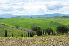 Gr?ne H?gel mit Zypressen und gr?ne Wiesen in Val d ?Orcia, Toskana, Italien stockfotos