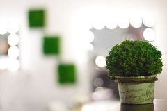 Gr?ner dekorativer Bush auf dem Hintergrund des Cosmetologyraumes und des Make-upstuhls mit Blumen stockfoto