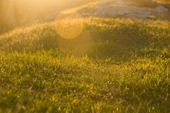 Gr?nes Gras im Sonnenuntergang nave stockfotografie