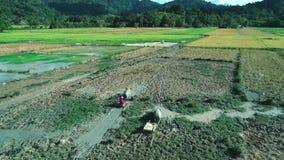 Gr Nido, Filippijnen - Februari 6, 2019: Luchtschot van de landbouwersgang van Filippijnen door een padieveldgebied met Water stock video