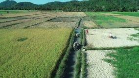 Gr Nido, Filippijnen - Februari 6, 2019: Luchtschot van de landbouwersgang van Filippijnen door een padieveldgebied met Water stock footage