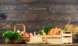 Gr?nsaker f?r h?stsk?rdsk?rdar Lokalt fullvuxen naturlig mat Fyrkantig sammans?ttning Vibrerande och f?rgrika gr?nsaker homegrown royaltyfri foto
