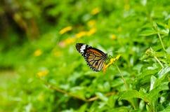 grön natur för fjäril Royaltyfri Fotografi