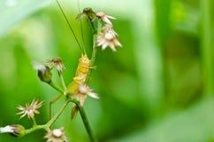 grön natur för gräshoppa Royaltyfria Bilder