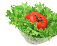 grön salladtomat Royaltyfria Foton