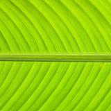 grön textur Arkivbild