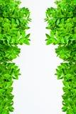 gröna leafs för ram Arkivfoton