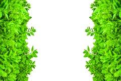 gröna leafs för ram Arkivfoto