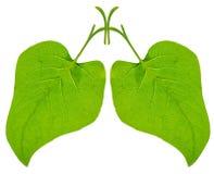gröna lungs royaltyfria bilder
