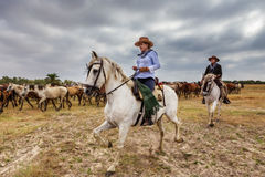 Gr ROCIO, ANDALUCIA, SPANJE - 26 JUNI 2016: De ruiterlood van de herdersvrouw een kudde van wild paarden bij het doopsel Royalty-vrije Stock Afbeelding