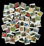 Går Sri Lanka, bakgrund med loppfoto av Ceylon gränsmärken Arkivfoton