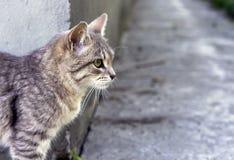 Gr? strimmig kattkatt p? en bakgrund av naturen royaltyfri foto