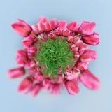 360 graadmening van Tulpen op de lentegebied Stock Foto's
