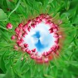 360 graadmening van Tulpen op de lentegebied Royalty-vrije Stock Afbeeldingen