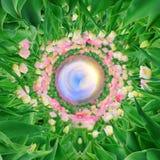 360 graadmening van Tulpen op de lentegebied Royalty-vrije Stock Afbeelding