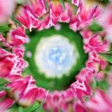 360 graadmening van Tulpen op de lentegebied Stock Foto
