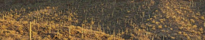 180 graadpanorama van sonoranwoestijn Stock Afbeelding