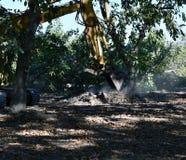 Graafwerktuig wordt gebruikt om boom-stompen en wortels bloot te leggen die stock afbeelding