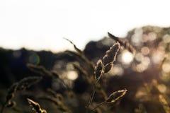 Graan Stock Foto's