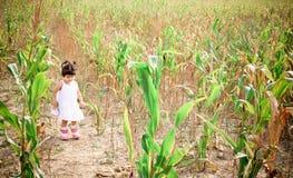 Graan field2 Stock Afbeeldingen
