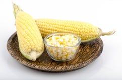 Graan, maïs (Zea mays L.) royalty-vrije stock foto
