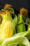 Graan op maïskolven Stock Foto