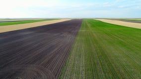 Graan, tarwe en vers geploegde vlakke gebieden stock video